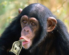 money chimp